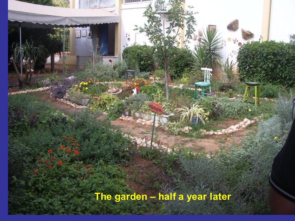 The garden – half a year later