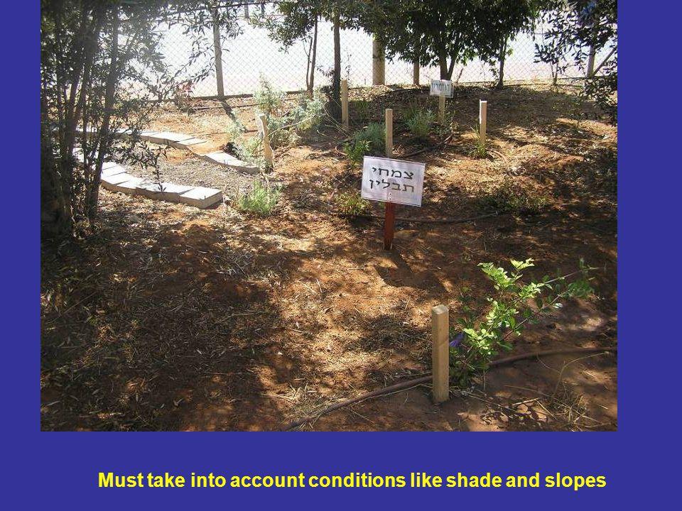 צמחי תבלין Must take into account conditions like shade and slopes