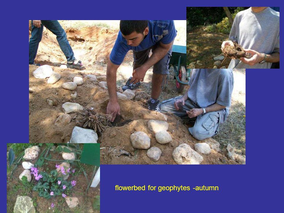 flowerbed for geophytes -autumn