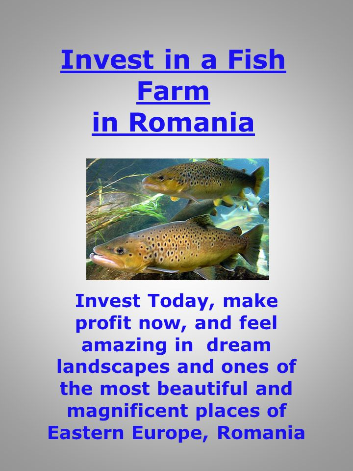 Invest in a Fish Farm in Romania Invest Today, make profit now, and feel amazing in dream landscapes and ones of the most beautiful and magnificent places of Eastern Europe, Romania