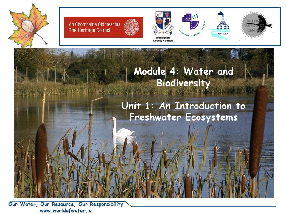 Our Water, Our Resource, Our Responsibility www.worldofwater.ie DRAFT Module 4: Water and Biodiversity Unit 1: An Introduction to Freshwater Ecosystems