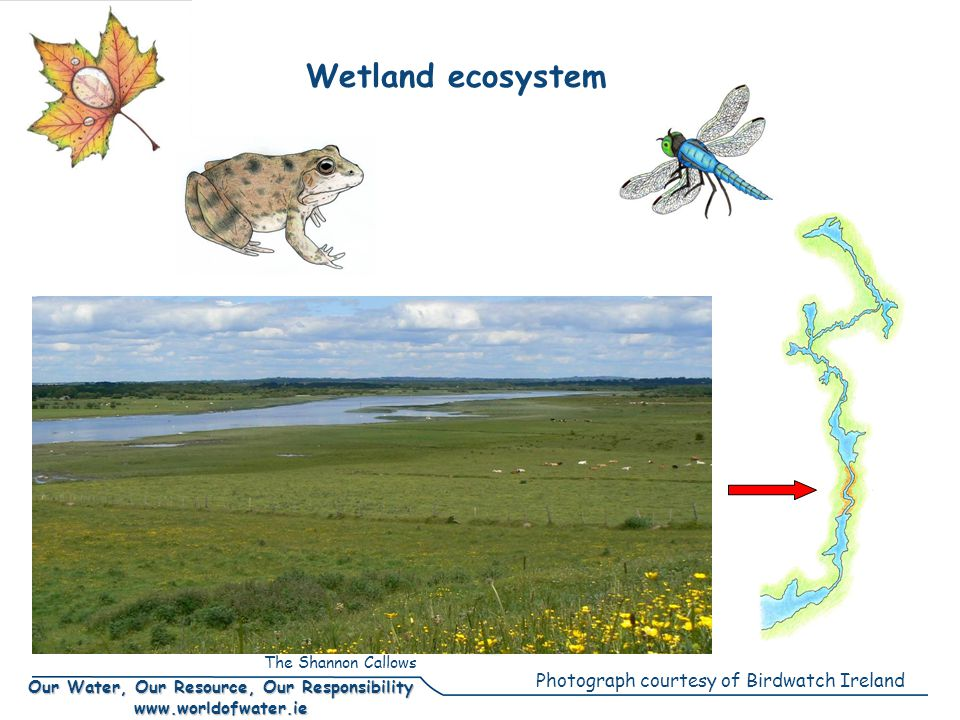 Our Water, Our Resource, Our Responsibility www.worldofwater.ie Wetland ecosystem Photograph courtesy of Birdwatch Ireland The Shannon Callows