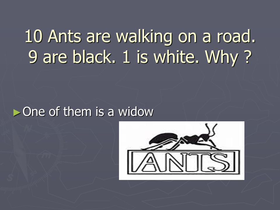 10 Ants are walking on a road. 9 are black. 1 is white. Why ► One of them is a widow