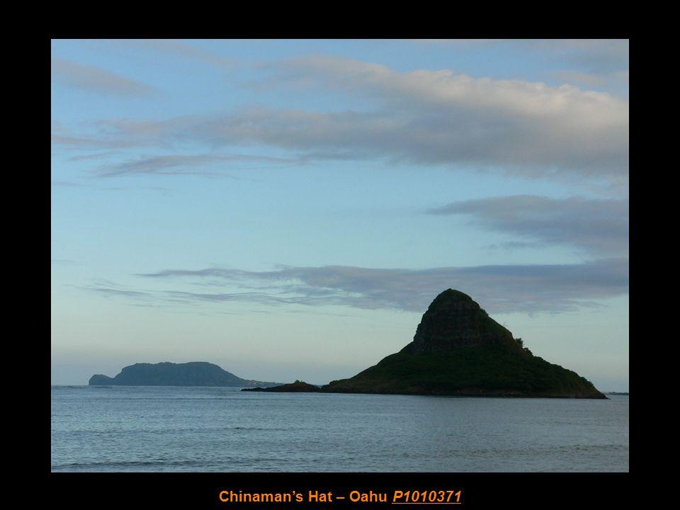 Beach/Park's Red Head Bird – Oahu P1010364