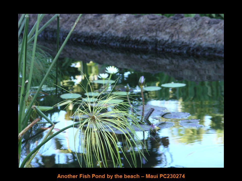 Tropical Forest – Hilo PC200199