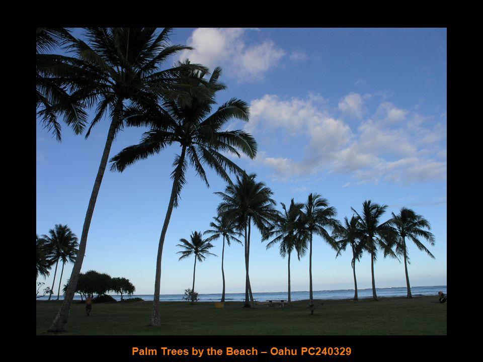 Pearl Harbor Memorial – Oahu PC240299