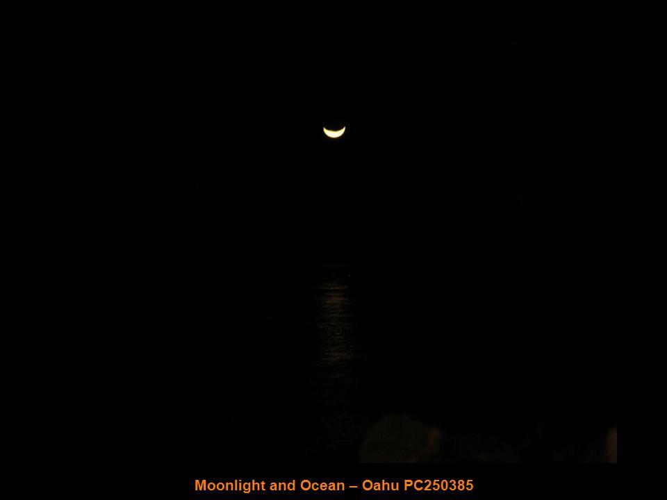 Christmas Eve at Sheraton Waikiki – Oahu PC240364