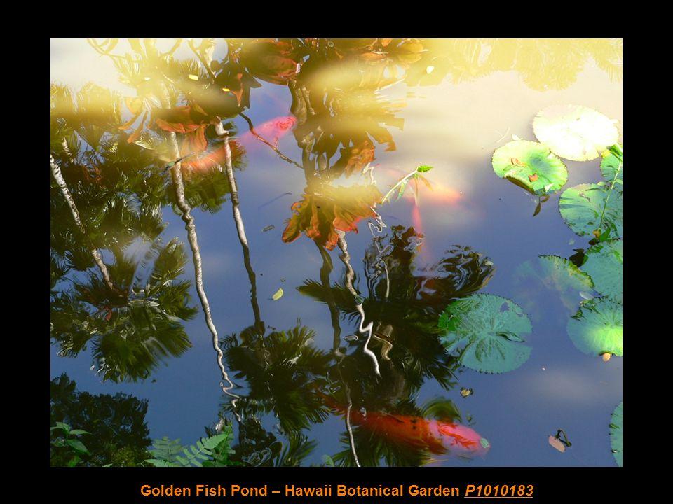 Water Falls – Hawaii Botanical Garden P1010175