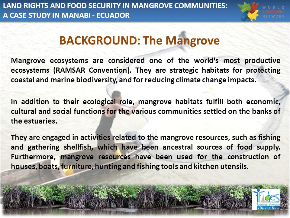 BACKGROUND: The Mangrove Mangrove ecosystems are considered one of the world s most productive ecosystems (RAMSAR Convention).