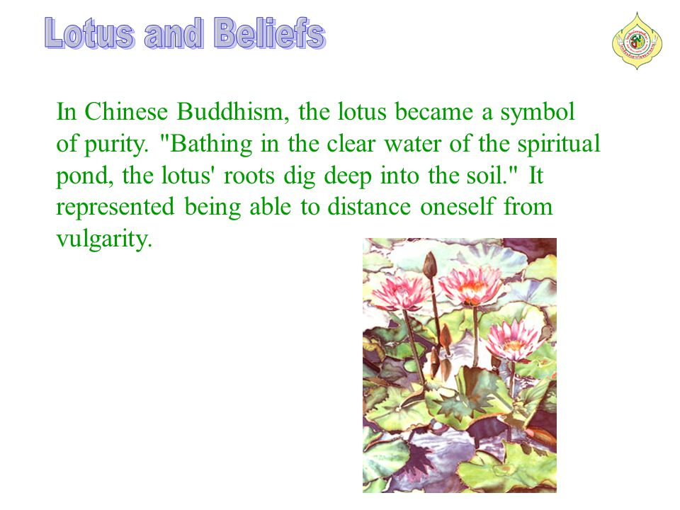 In Chinese Buddhism, the lotus became a symbol of purity.