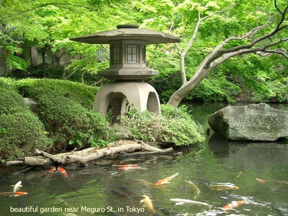 Shinjuku garden, Tokyo