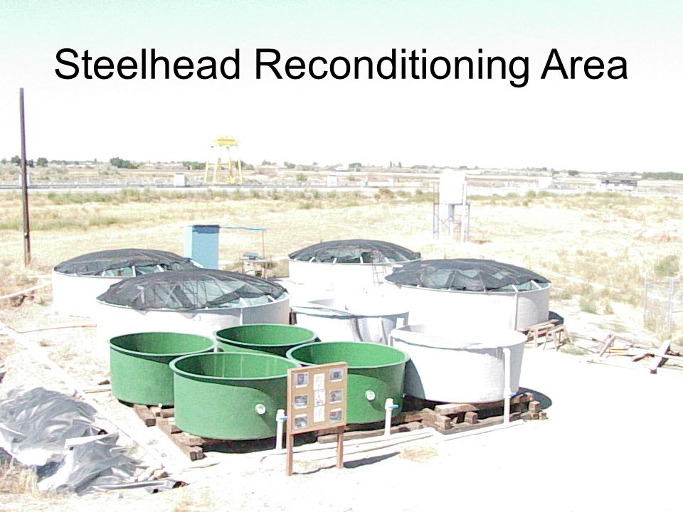 Steelhead Reconditioning Area