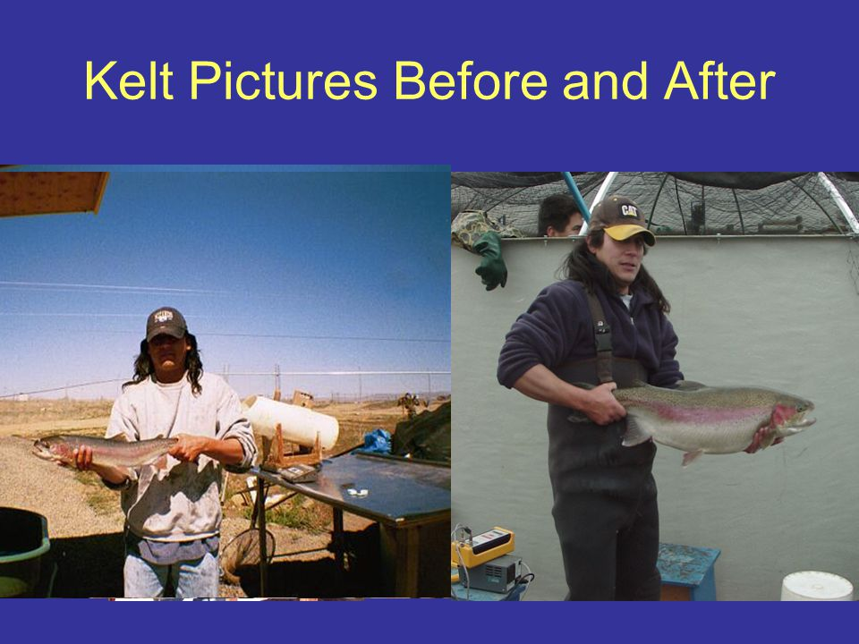 Kelt Pictures Before and After