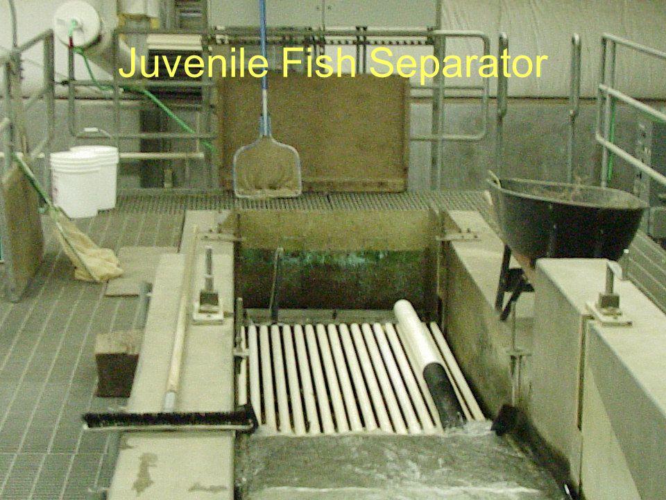 Juvenile Fish Separator
