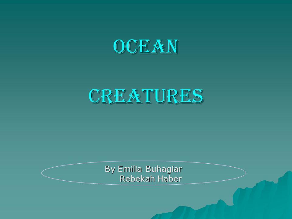 OCEAN CREATURES By Emilia Buhagiar Rebekah Haber Rebekah Haber