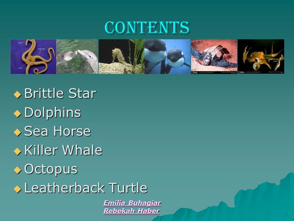 Emilia Buhagiar Rebekah Haber contents  Brittle Star  Dolphins  Sea Horse  Killer Whale  Octopus  Leatherback Turtle