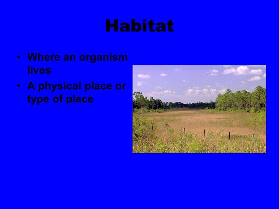 Air Rock Trees Water Grass Dirt Snow Prairie Dog Log cabin