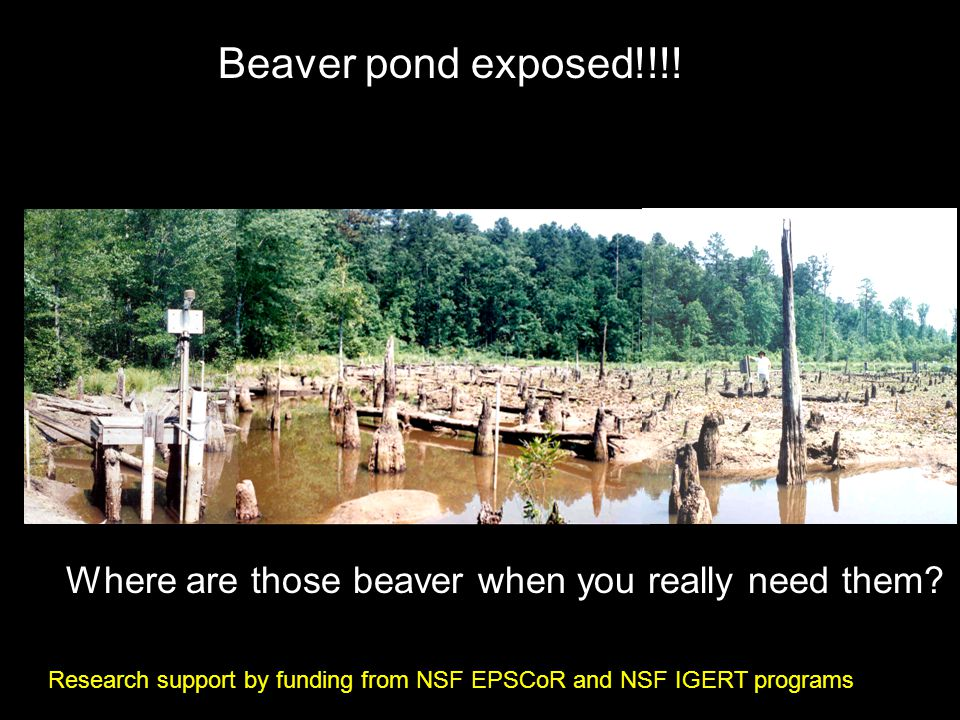 Where are those beaver when you really need them. Beaver pond exposed!!!.