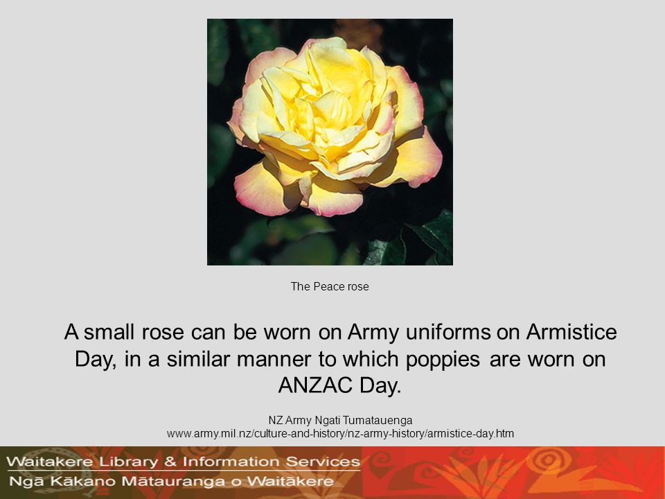 A small rose can be worn on Army uniforms on Armistice Day, in a similar manner to which poppies are worn on ANZAC Day.