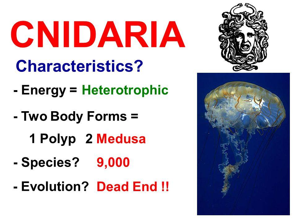 CNIDARIA - Two Body Forms = 1 Polyp - Energy =Heterotrophic 2 Medusa - Species?9,000 Characteristics? - Evolution? Dead End !!