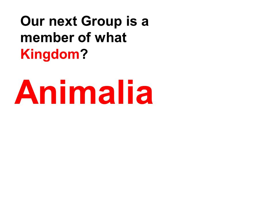 Animalia Our next Group is a member of what Kingdom?