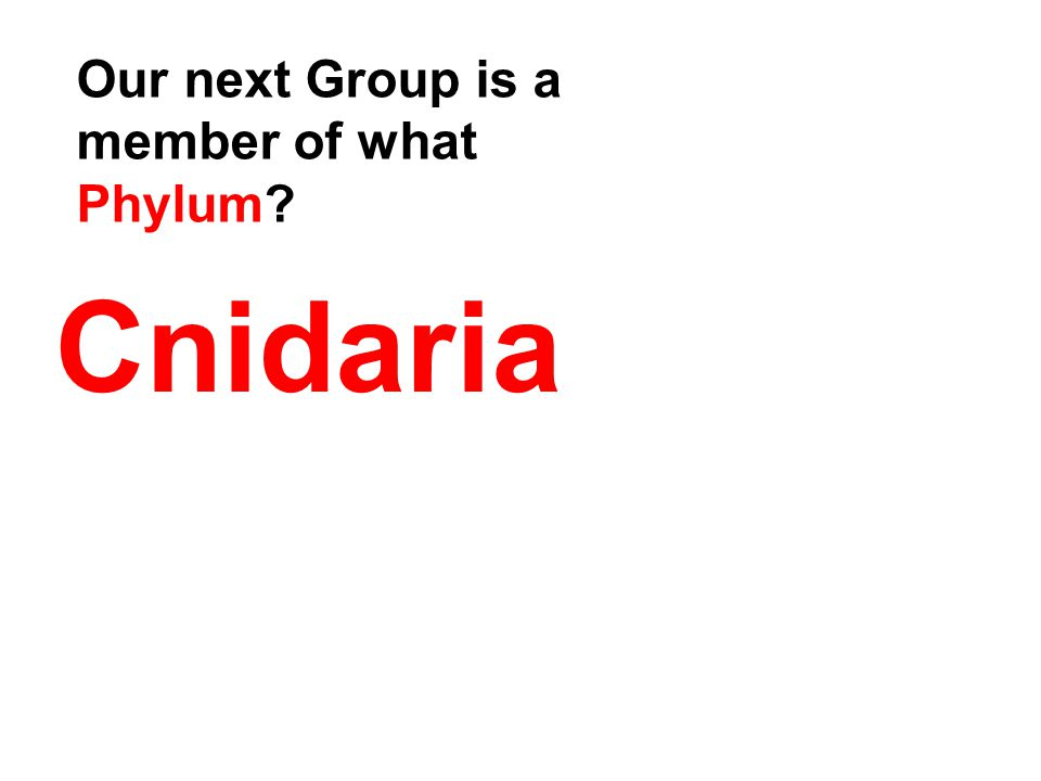 Cnidaria Our next Group is a member of what Phylum