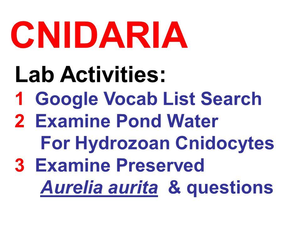CNIDARIA Lab Activities: 1 Google Vocab List Search 2 Examine Pond Water For Hydrozoan Cnidocytes 3 Examine Preserved Aurelia aurita & questions