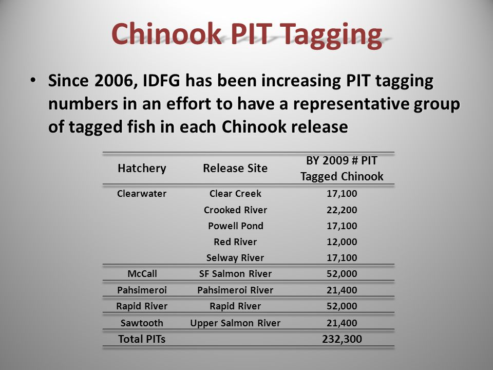 Chinook PIT Tagging Since 2006, IDFG has been increasing PIT tagging numbers in an effort to have a representative group of tagged fish in each Chinook release Since 2006, IDFG has been increasing PIT tagging numbers in an effort to have a representative group of tagged fish in each Chinook release