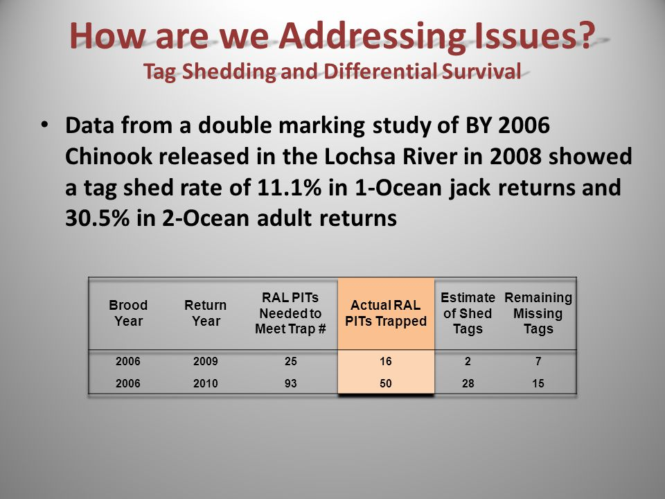 Data from a double marking study of BY 2006 Chinook released in the Lochsa River in 2008 showed a tag shed rate of 11.1% in 1-Ocean jack returns and 30.5% in 2-Ocean adult returns How are we Addressing Issues.