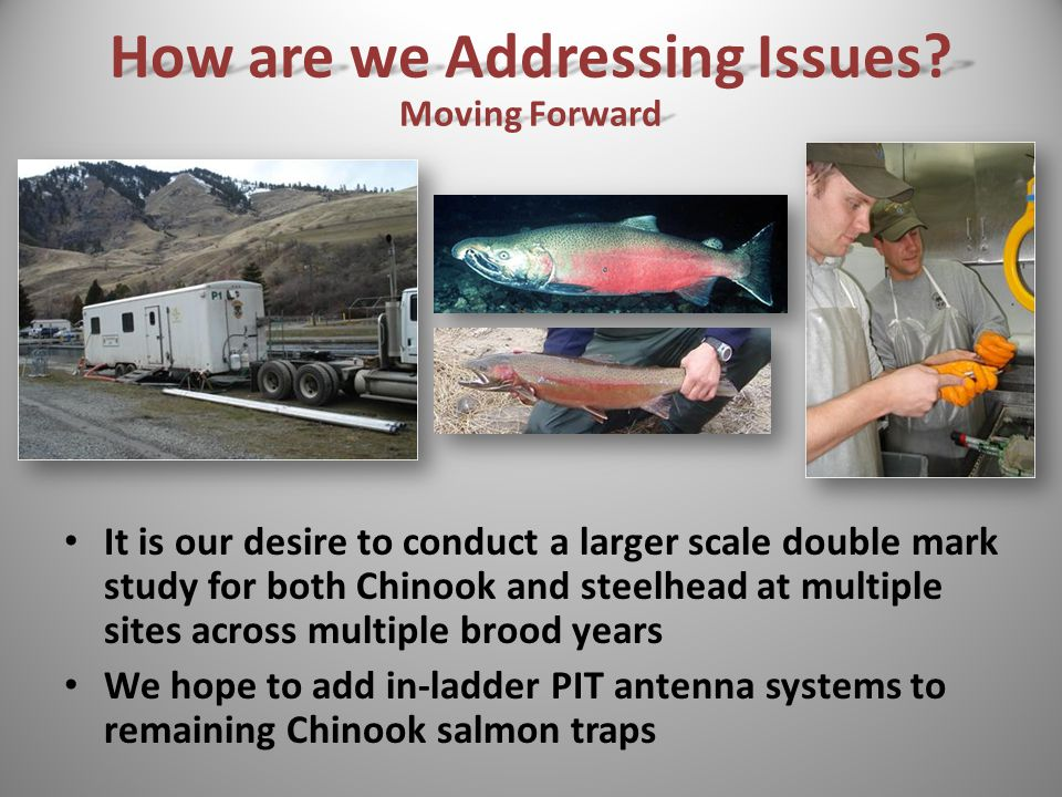 It is our desire to conduct a larger scale double mark study for both Chinook and steelhead at multiple sites across multiple brood years We hope to add in-ladder PIT antenna systems to remaining Chinook salmon traps How are we Addressing Issues.