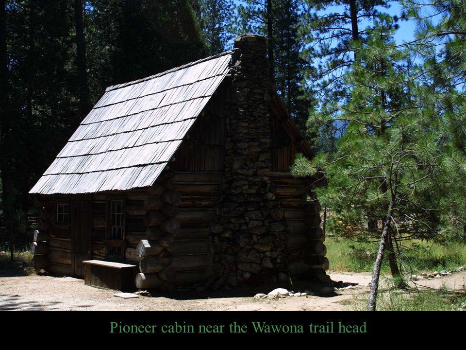 Pioneer cabin near the Wawona trail head