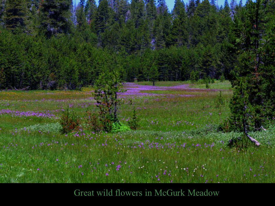 Great wild flowers in McGurk Meadow