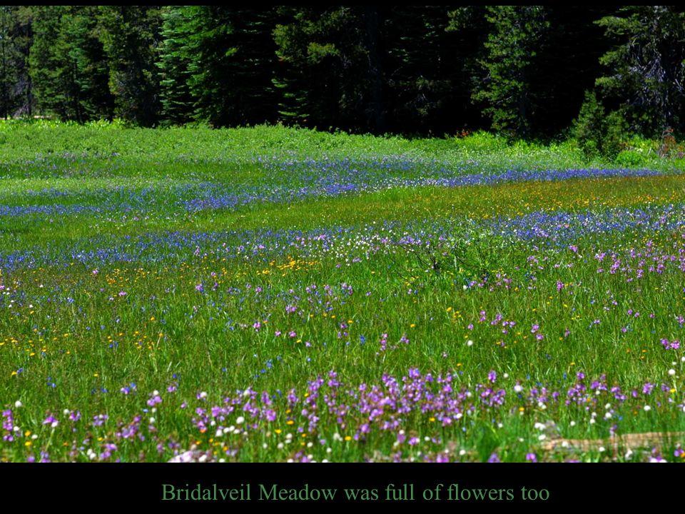 Bridalveil Meadow was full of flowers too