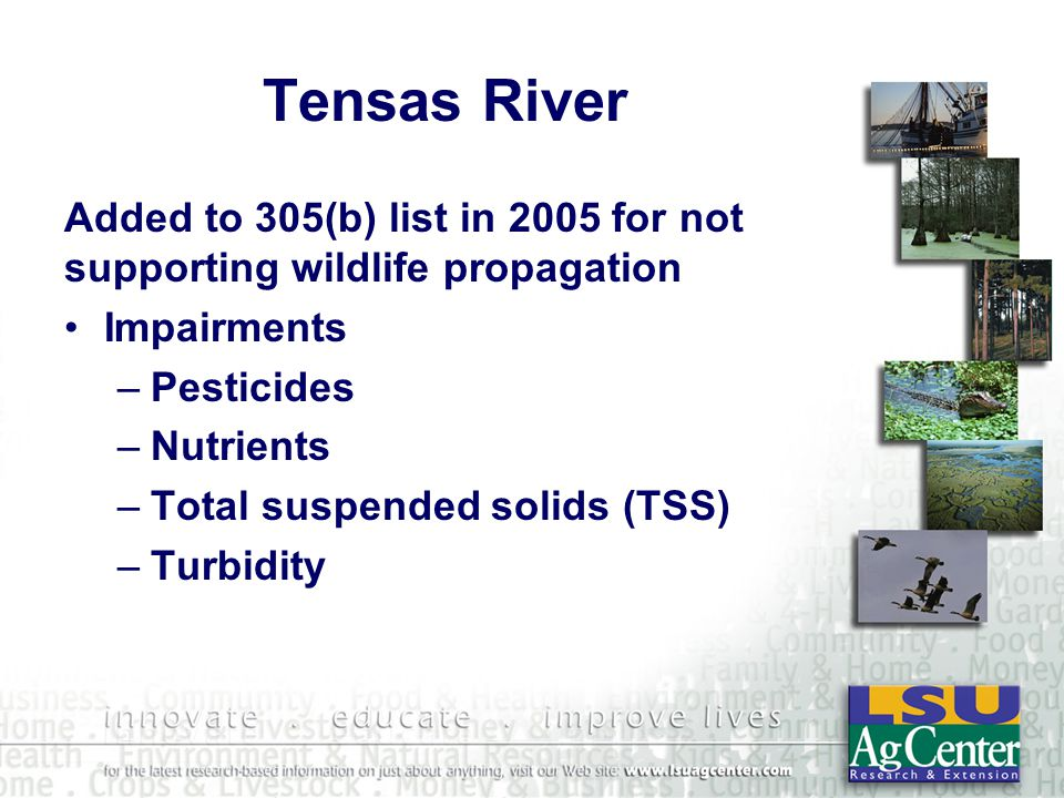 Tensas River Added to 305(b) list in 2005 for not supporting wildlife propagation Impairments –Pesticides –Nutrients –Total suspended solids (TSS) –Turbidity