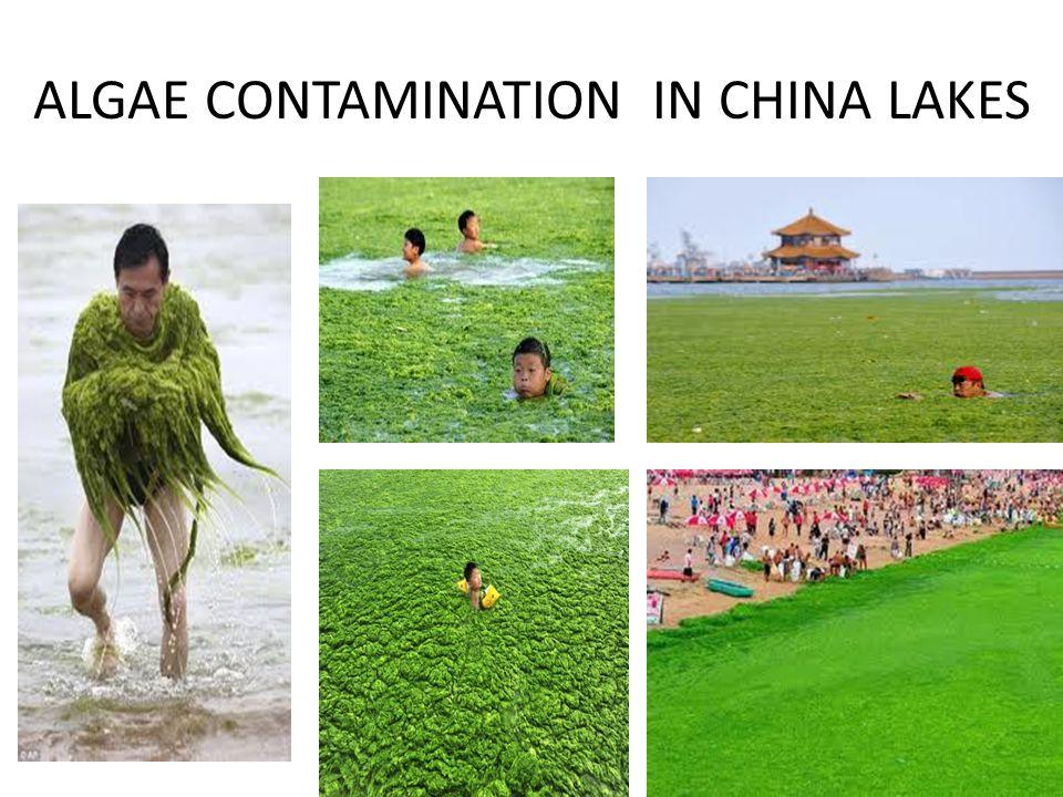 ALGAE CONTAMINATION IN CHINA LAKES