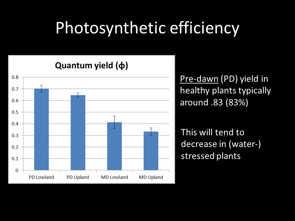 Photosynthetic efficiency Pre-dawn (PD) yield in healthy plants typically around.83 (83%) This will tend to decrease in (water-) stressed plants