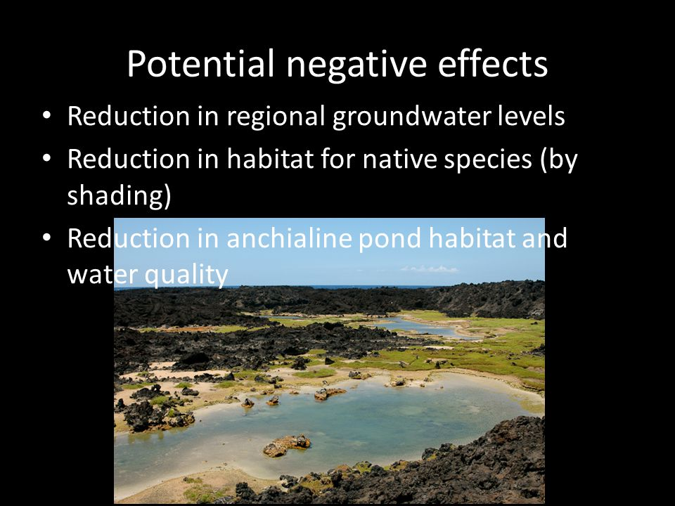 Potential negative effects Reduction in regional groundwater levels Reduction in habitat for native species (by shading) Reduction in anchialine pond habitat and water quality