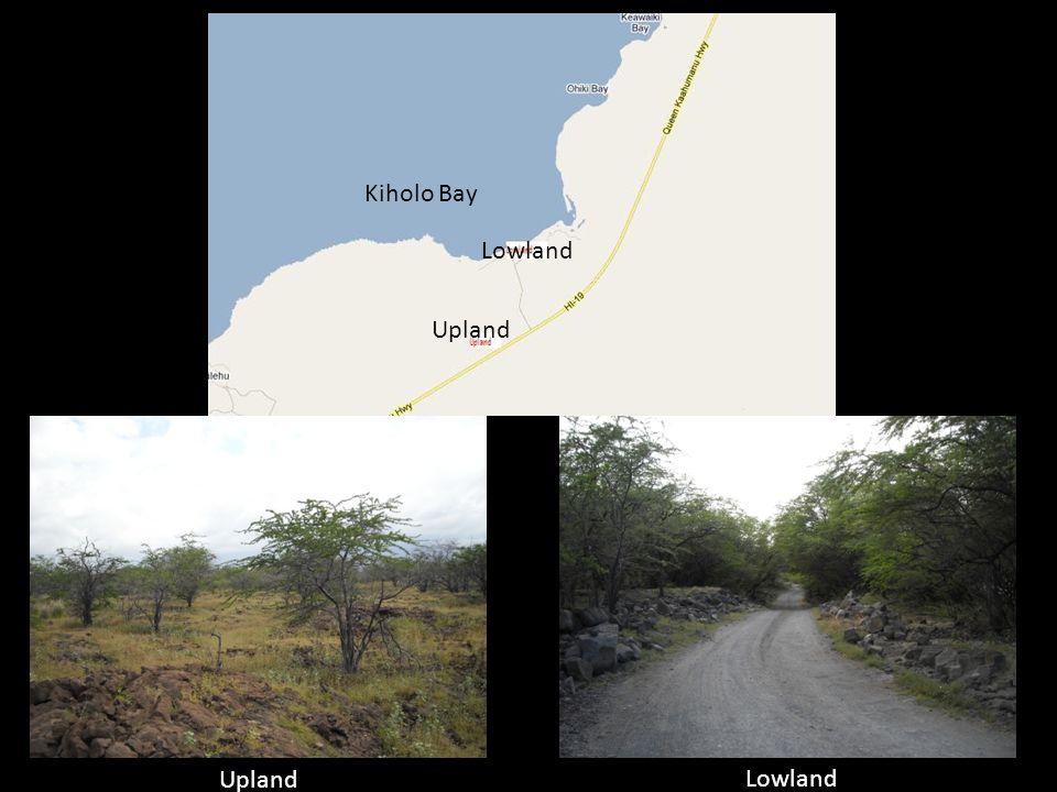 Upland Lowland Kiholo Bay Upland Lowland