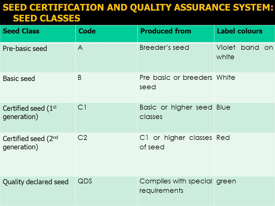 O\ SEED CERTIFICATION AND QUALITY ASSURANCE SYSTEM: SEED CLASSES Seed ClassCodeProduced fromLabel colours Pre-basic seed ABreeder's seed Violet band on white Basic seed B Pre basic or breeders seed White Certified seed (1 st generation) C1 Basic or higher seed classes Blue Certified seed (2 nd generation) C2 C1 or higher classes of seed Red Quality declared seed QDSComplies with special requirements green