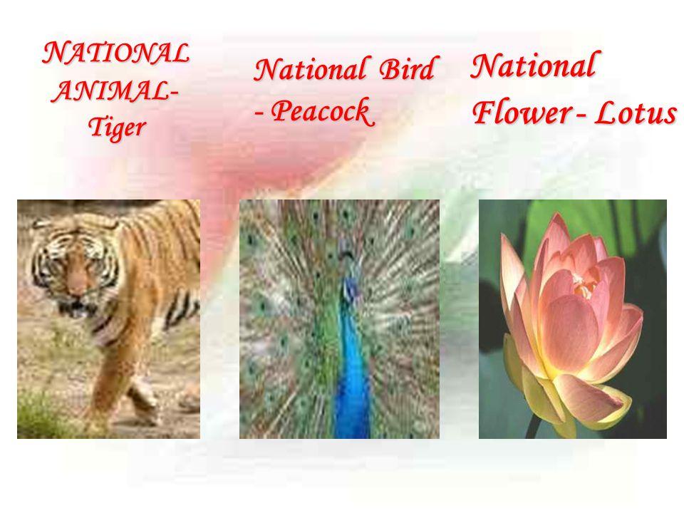 N ATIONAL ANIMAL- Tiger National Bird - Peacock National Flower - Lotus