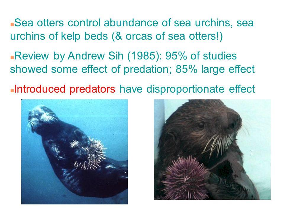 n Sea otters control abundance of sea urchins, sea urchins of kelp beds (& orcas of sea otters!) n Review by Andrew Sih (1985): 95% of studies showed