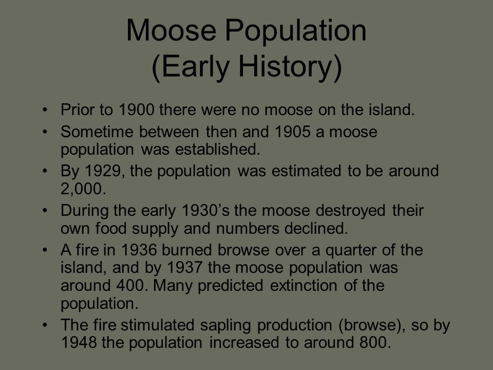 Moose Population (Early History) Prior to 1900 there were no moose on the island.