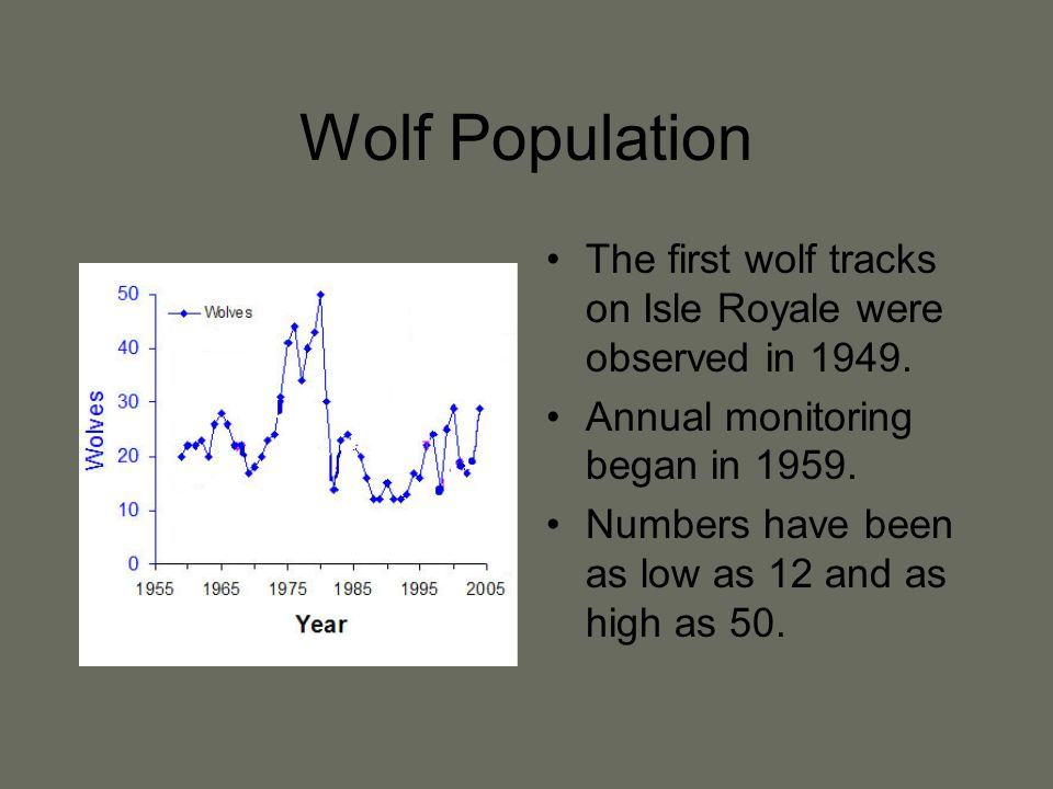 Wolf Population The first wolf tracks on Isle Royale were observed in 1949.