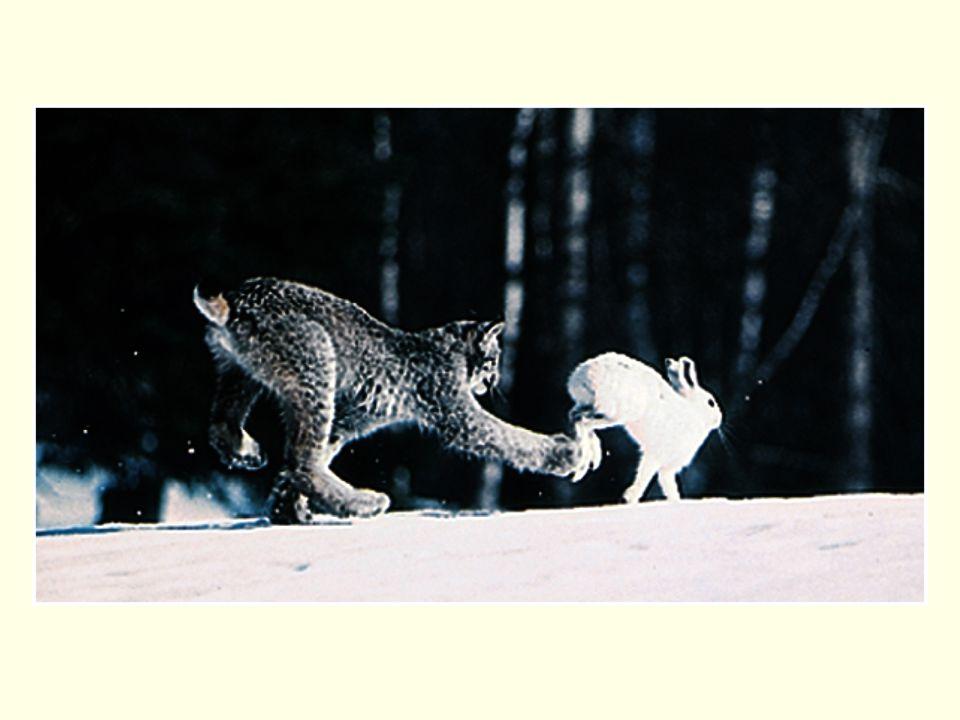 Factors promoting stability in predator-prey relationships 1.Inefficient predators (prey escaping) –less efficient predators (lower c) allow more prey to survive –more living prey support more predators 2.Outside factors limit populations –higher d for predators –lower r for prey