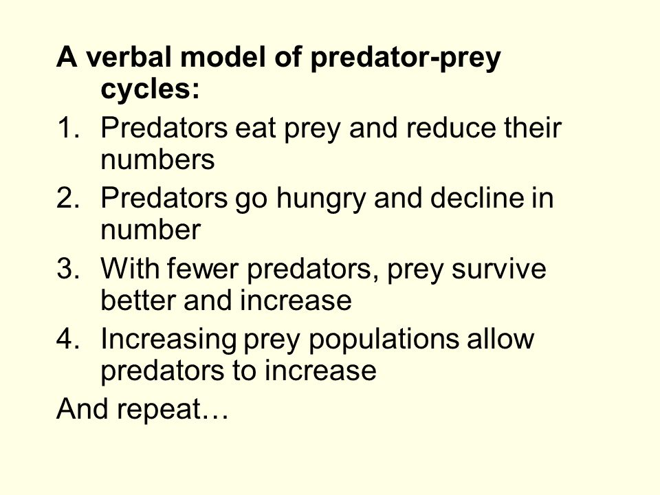 A verbal model of predator-prey cycles: 1.Predators eat prey and reduce their numbers 2.Predators go hungry and decline in number 3.With fewer predato