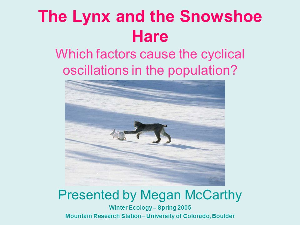 Top Down??.Is the Canadian Lynx the main factor in the decline in Hare population.