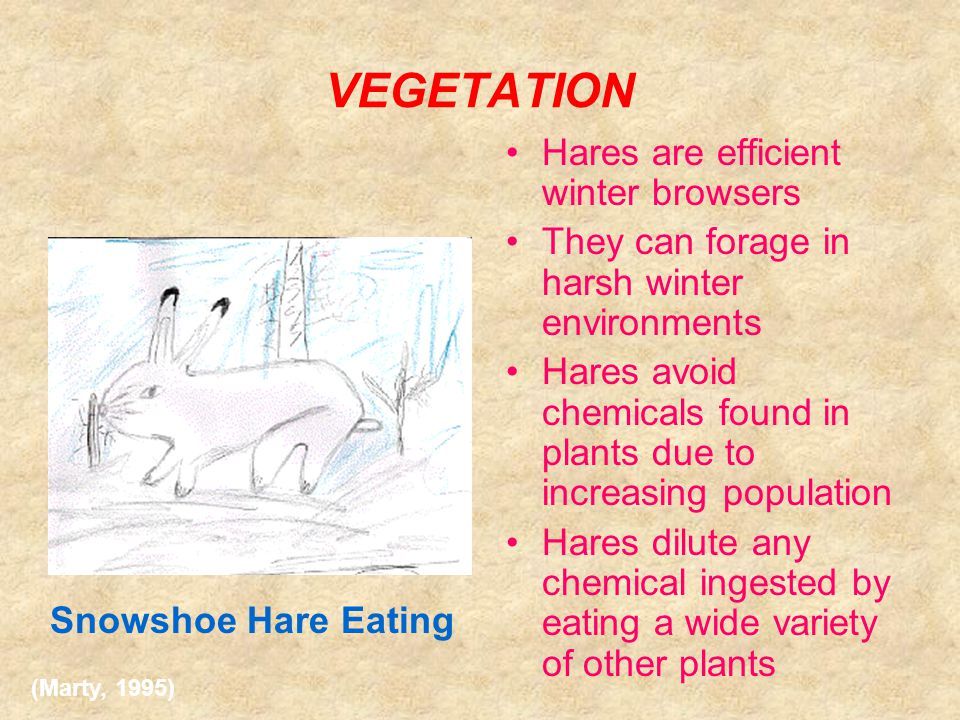 Counter – Philosophies Vegetation: Hares also adapt to the vegetation defenses and chemical counter-defenses over time, therefore cycle is not mainly affected by lack of nutritious vegetation.