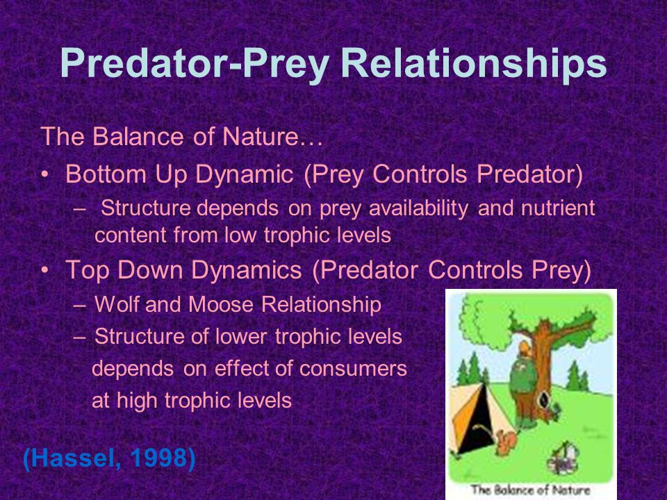 Predator-Prey Relationships The Balance of Nature… Bottom Up Dynamic (Prey Controls Predator) – Structure depends on prey availability and nutrient content from low trophic levels Top Down Dynamics (Predator Controls Prey) –Wolf and Moose Relationship –Structure of lower trophic levels depends on effect of consumers at high trophic levels (Hassel, 1998)