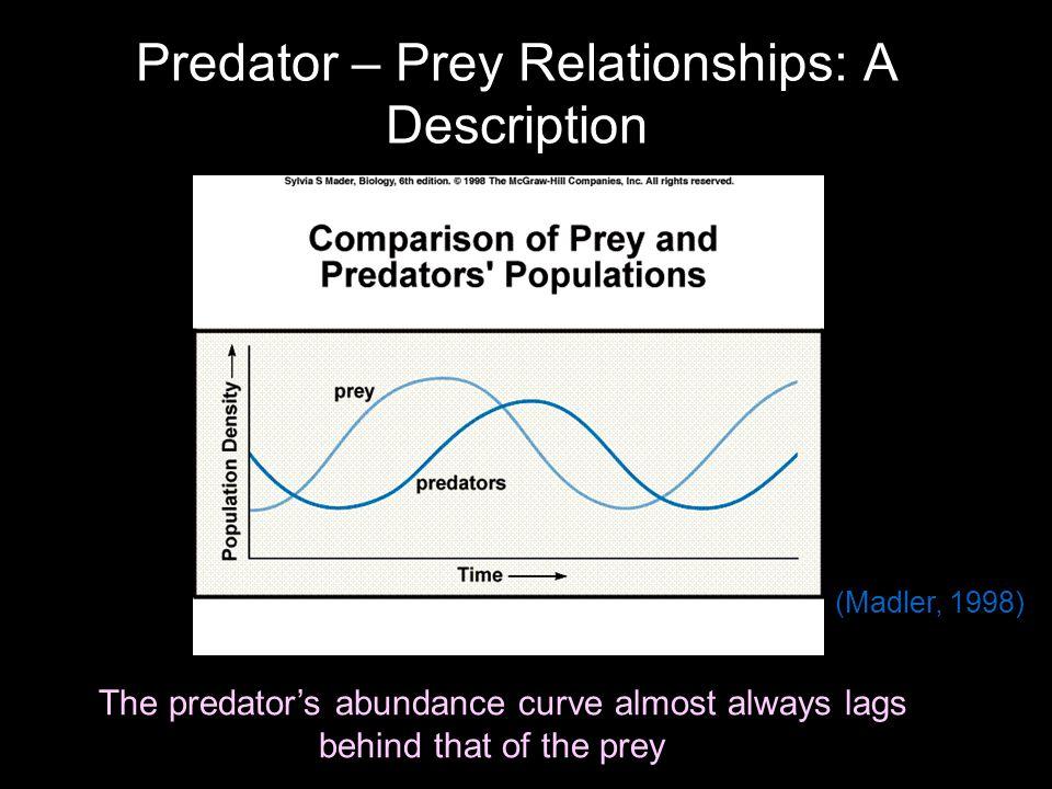 Predator – Prey Relationships: A Description The predator's abundance curve almost always lags behind that of the prey (Madler, 1998)