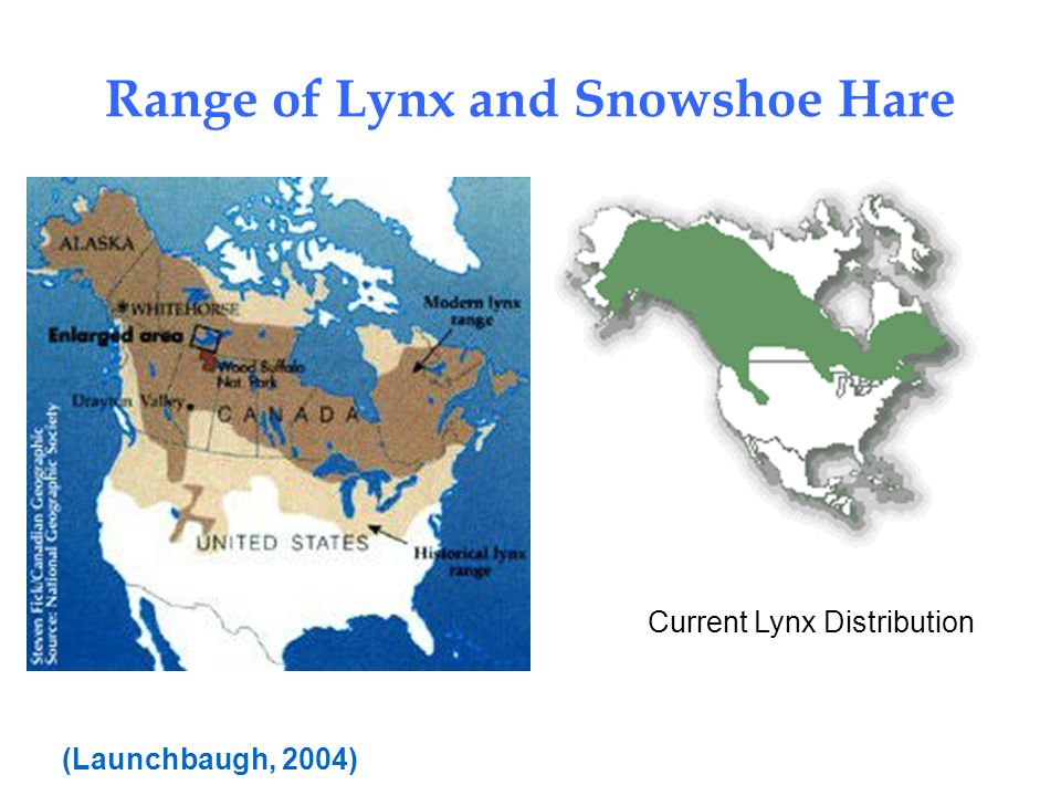 Range of Lynx and Snowshoe Hare Current Lynx Distribution (Launchbaugh, 2004)